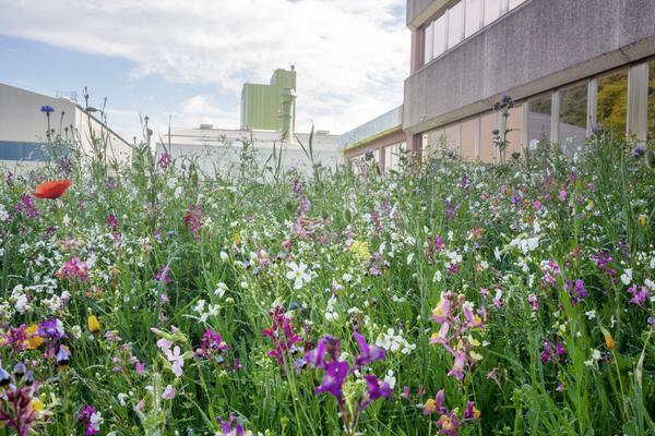 Sustainability_ Dillenburg meadow 02